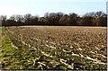 SU5269 : Ramsbury Corner – Iron-age Hillfort by D Gore