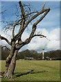 SP9712 : An old hawthorn tree and Ashridge Monument by Chris Reynolds