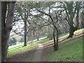 SX9372 : Homeyards Botanic Garden, trees by Robin Stott