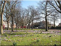 TQ4077 : Spring comes to Batley Park by Stephen Craven
