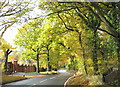 TQ5690 : Autumn colour at Warley road, Tylers Common by Derek Voller