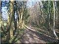 TQ6255 : Wealdway in Shipbourne Forest by David Anstiss