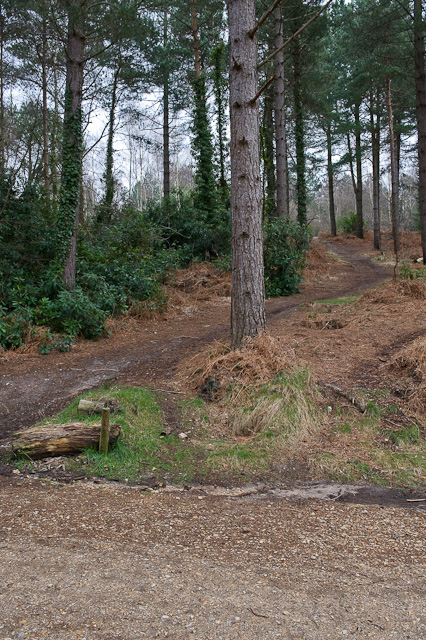 Bikers' Paths up Castle Hill, Lord's Wood
