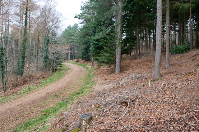 Approaching Castle Hill, Lord's Wood