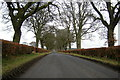 NO2946 : View of Meigle / Logie Road bounded by hedges by Alan Morrison
