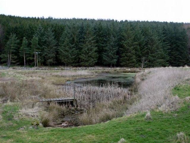 Pond just north of Alnham Church