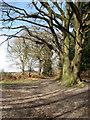 TG1716 : Path to Bilney Lane by Evelyn Simak