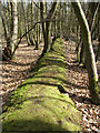 TG1716 : A moss-covered ridge boundary by Evelyn Simak
