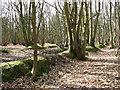TG1716 : Sunken lane traversing woodland by Evelyn Simak