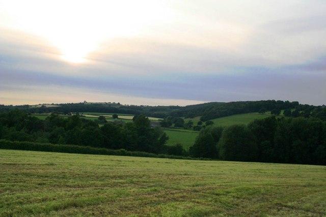 Summer evening looking towards Deffer woods
