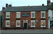 SK3950 : The Thorn Tree Pub by JThomas