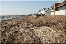 SD3741 : Rubbish Strewn River Bank by Bob Jenkins