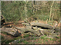 TL4400 : Epping Forest: log pile with fungi by Stephen Craven