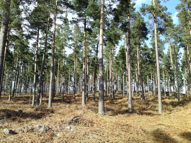 Torquhandallochy Wood