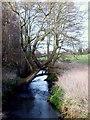SJ8905 : River Penk View by Gordon Griffiths