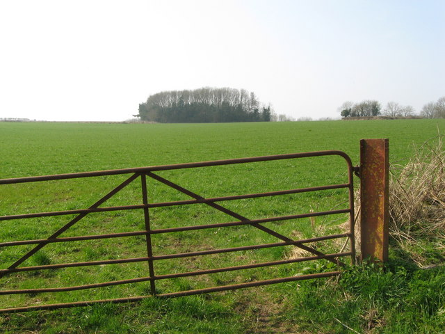 Gate, field and small woodland.