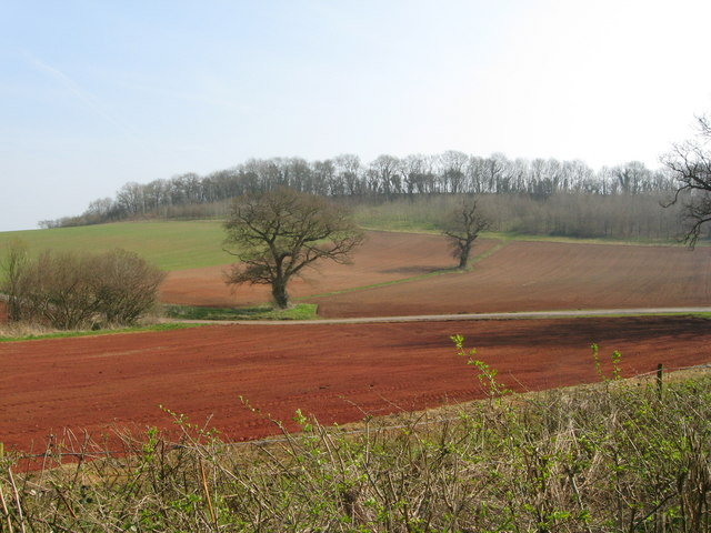 Hedgerow, ploughed fields and trees