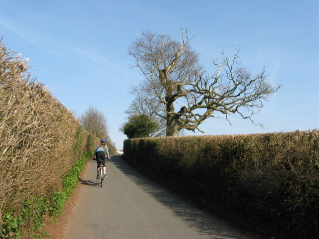 Lane, hedge, tree and Mette cycling