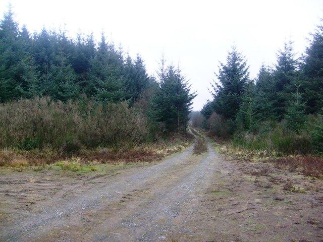 Glengruboch Moor forest road junction
