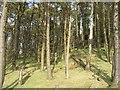 NS8462 : Cant Hills Plantation by Richard Webb
