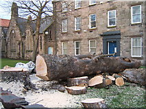 NU0052 : Tree felled, Palace Street East, Berwick upon Tweed by Barbara Carr