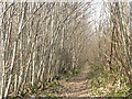 TQ7055 : Footpath through Oaken Wood by Stephen Craven