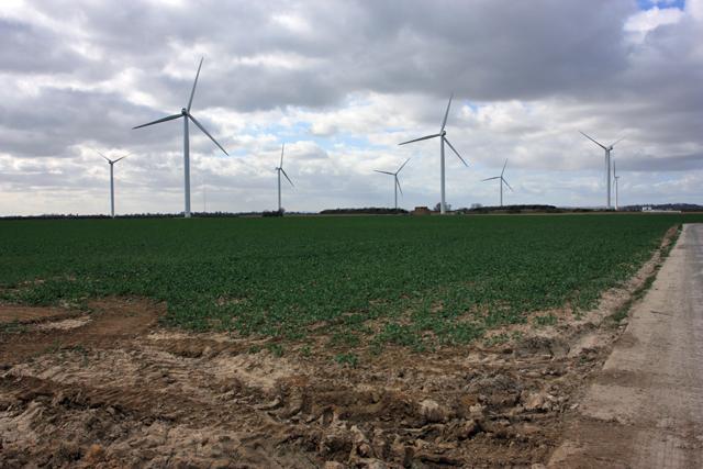 Wind and crops farmland