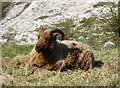 SP9313 : A Contented Lawn Mower by Chris Reynolds