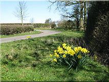 SE3766 : Sheaflands Lane by David Rogers