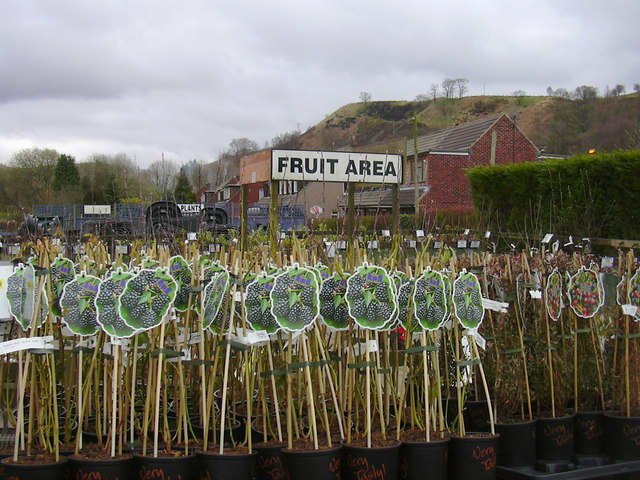 Gordon Rigg (Nurseries) Ltd. Calderbank Nurseries, Rochdale Road, Walsden