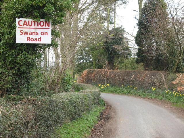 Caution, Swans on Raikes Lane