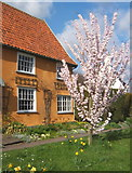 TM1763 : Springtime in Debenham by Andrew Hill