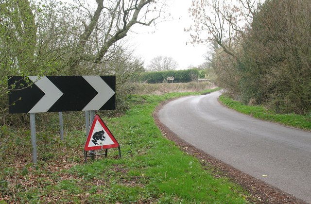 Caution, jumping amphibians