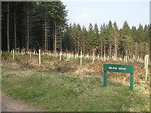 SO6210 : Nelson Grove, Saintlow Inclosure by Pauline E
