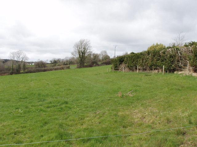 Pasture near Muchwood Crossroads
