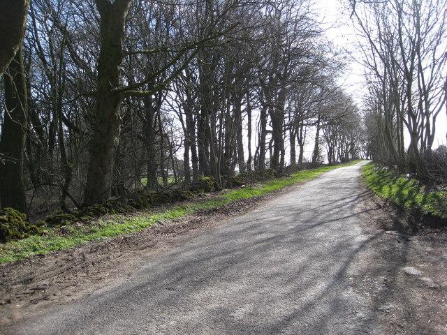 Lane near junction with Long Rake