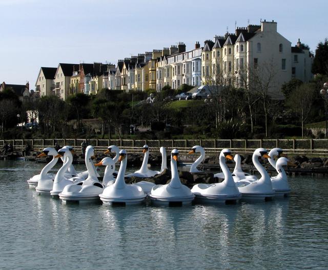 The Pickie swans, Bangor