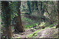 TQ5942 : Small stream, Barnett's Wood Nature Reserve by N Chadwick