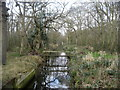 TG3921 : Channel near Catfield Common by Chris Heaton