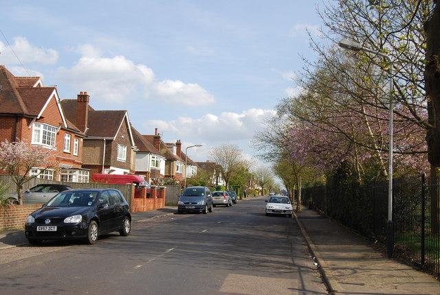 Chestnut Avenue (2) by N Chadwick