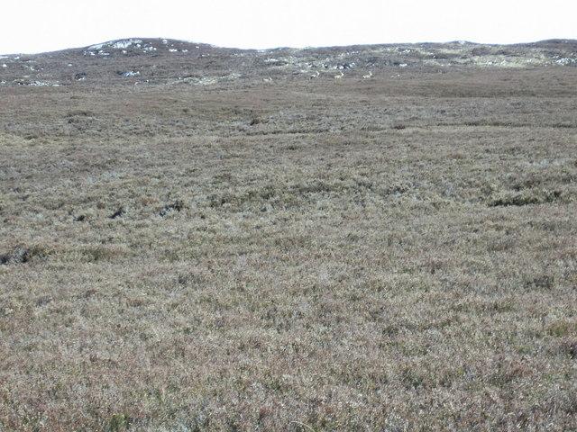 Deer on Western Slopes of Creag nam Bodach