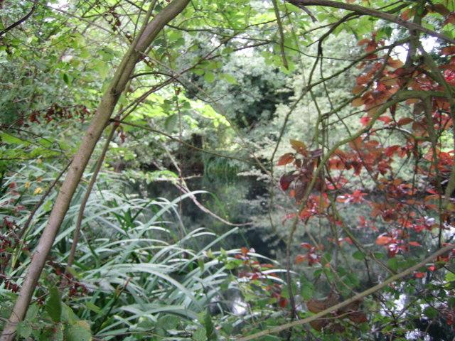 Pond near Upper South Farm 3