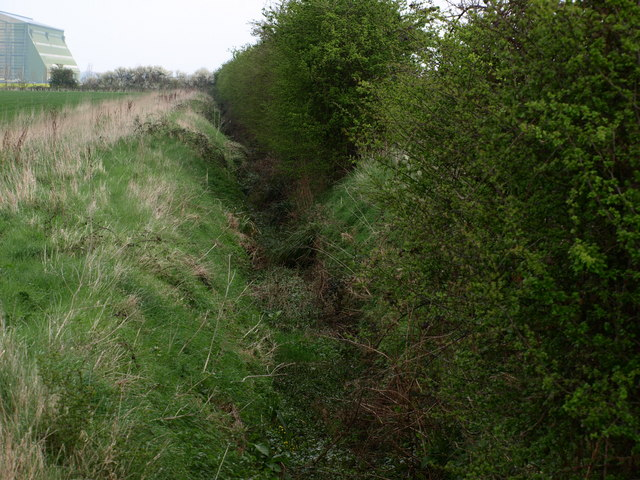 Hedgeline and Ditch