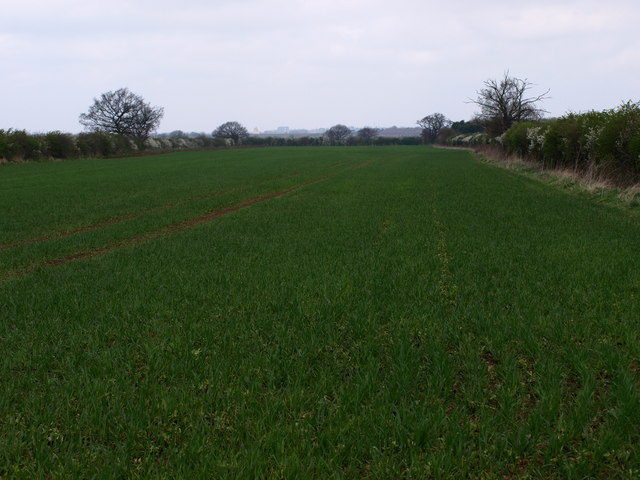 Farmland South of Cotton End