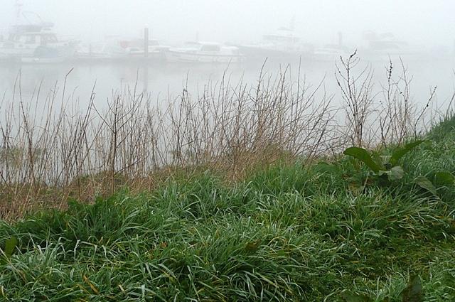 Misty River Barrow