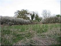 SY9898 : Owen's Acre in Bear Mead by John Palmer