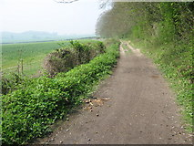 TQ5959 : The North Downs Way on the Pilgrims Way by David Anstiss