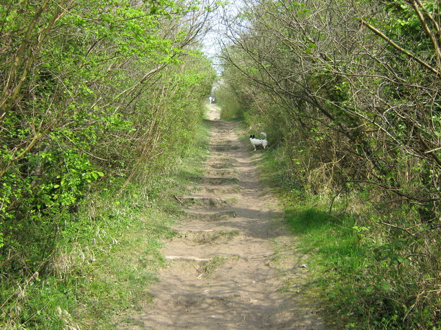 North Downs Way up to Otford Mount