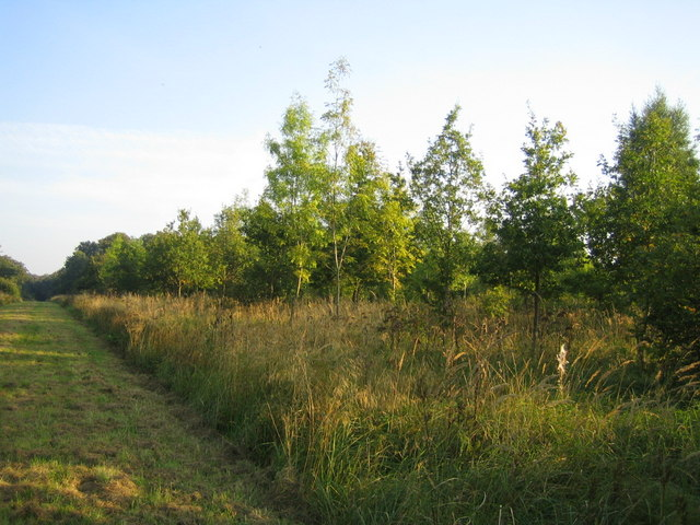 Grendon Wood 2