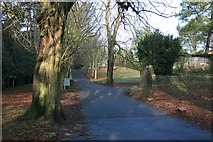 ST1477 : The north carriage drive, Insole Court, Llandaff by Adrian Platt